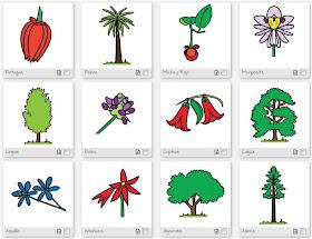 Dibujos Color Y Colorear De La Flora Chilena