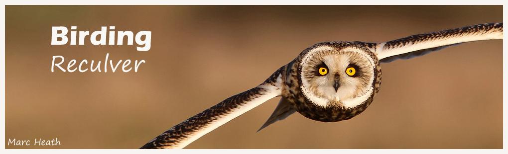 Birding Reculver