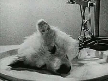 Wow..., betapa sadisnya para ilmuwan ini....!!! - http://poerwalaksana.blogspot.com/