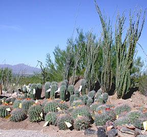 Desert Plants Desert Plants Beauty Alone Desert