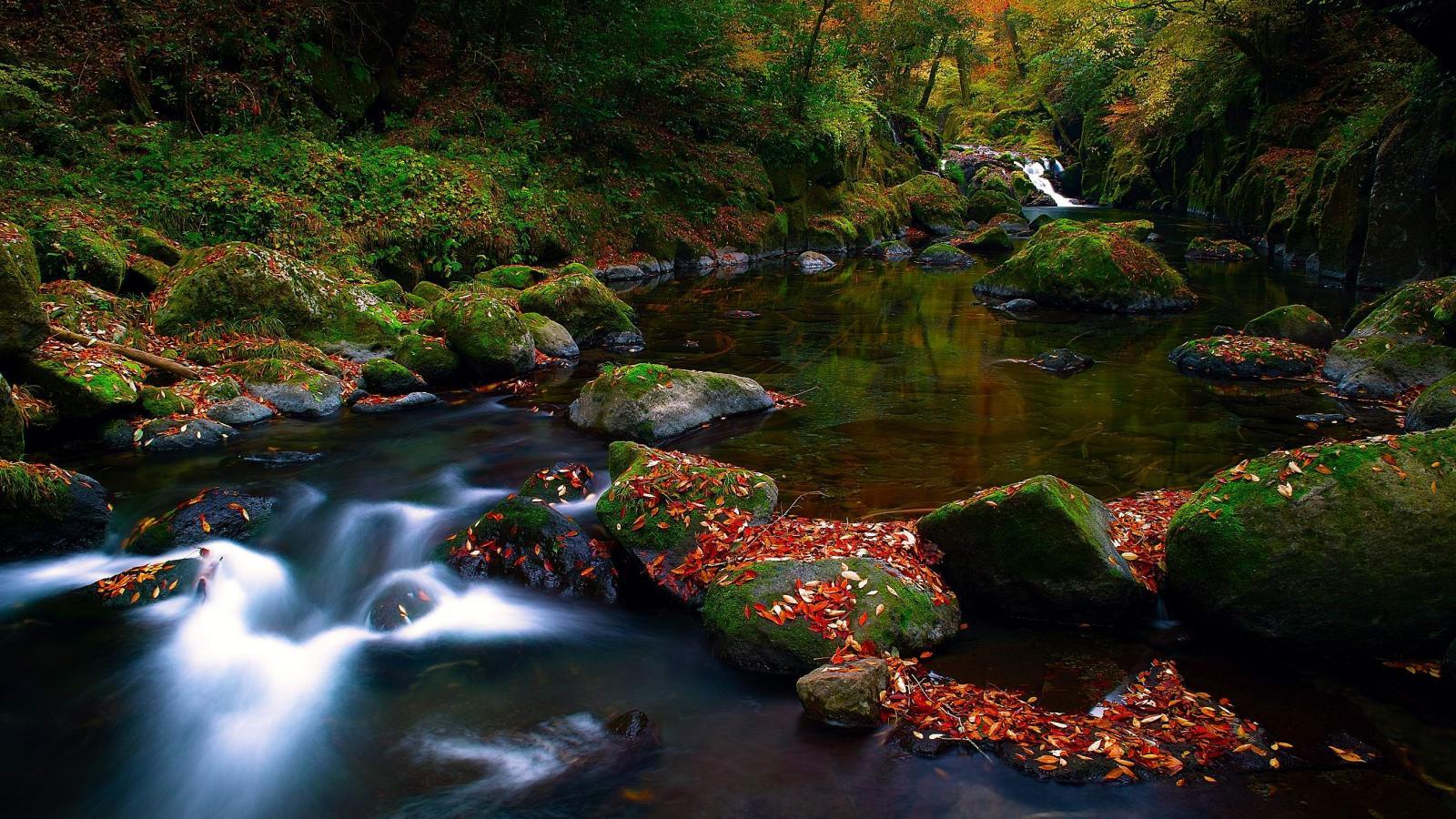 Красивые фотографии осенней природы  Newpixru
