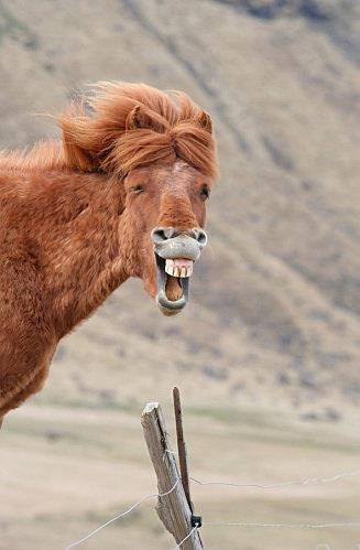 Do I Look Like Cute | Horse Cute & Funny Images 2013 ...
