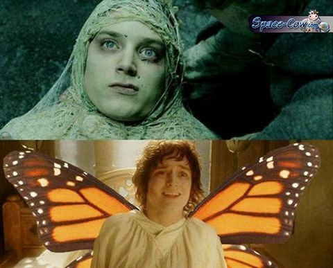 funny Frodo butterfly picture