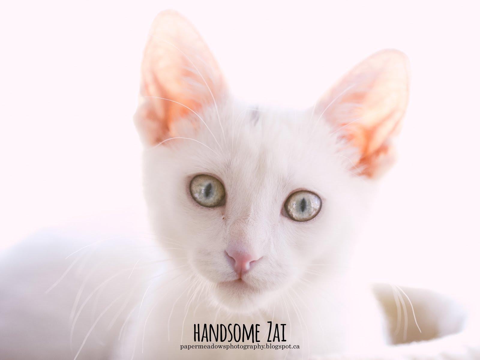 Handsome Zai!
