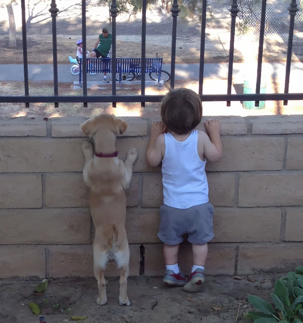 adorable dog pictures, puppy and little kid best friends