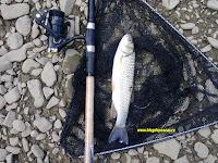 pescuit la clean pe siret