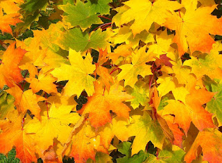Сценарий осеннего бала - желтые, зеленые, багряные осенние листья лежащие на земле