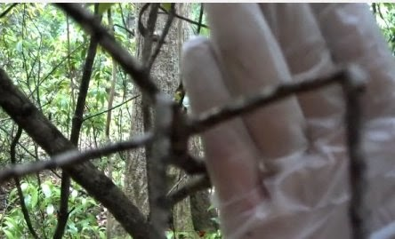 Stacy Brown Bigfoot Evidence