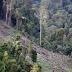 Greenpeace Minta Pemerintah Pusat Lanjutkan Penyelamatan Hutan Papua