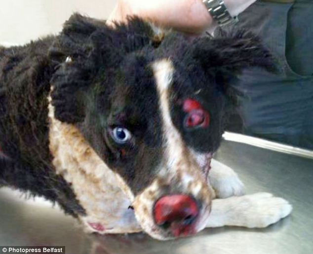 Can Dogs Get Pink Eye From Owner