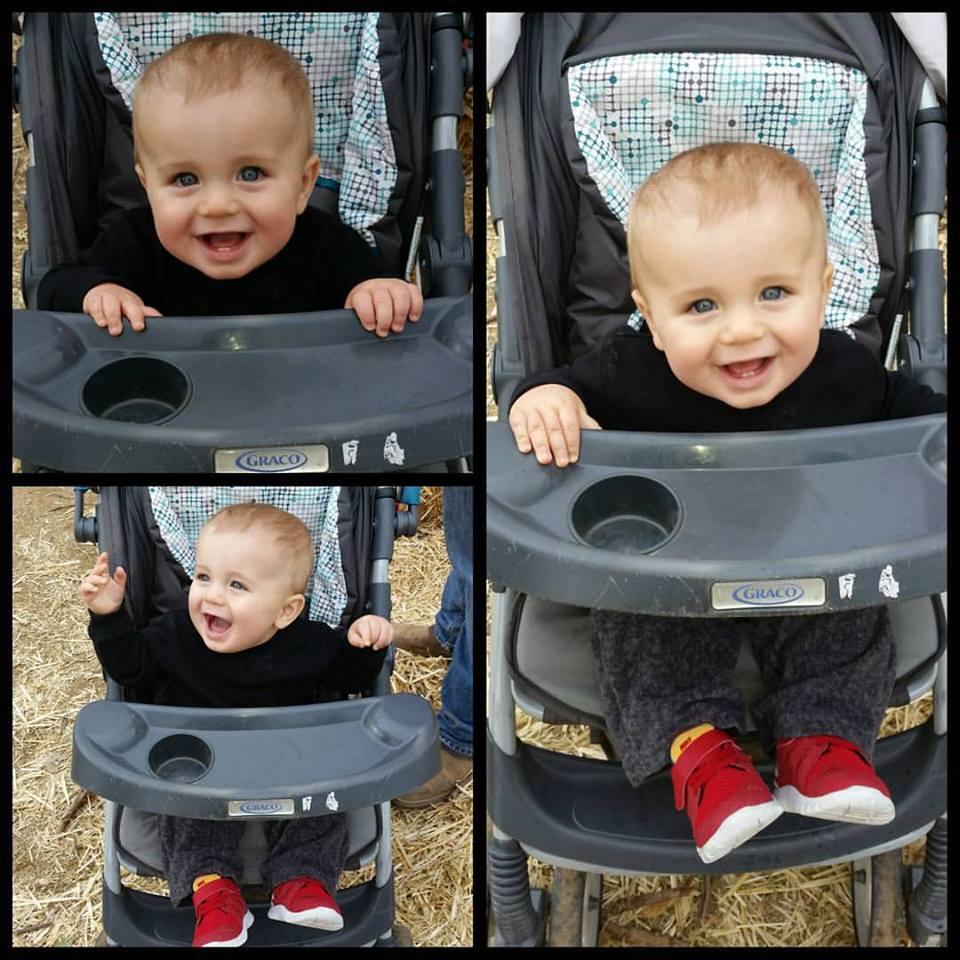 Radley - 8 months old