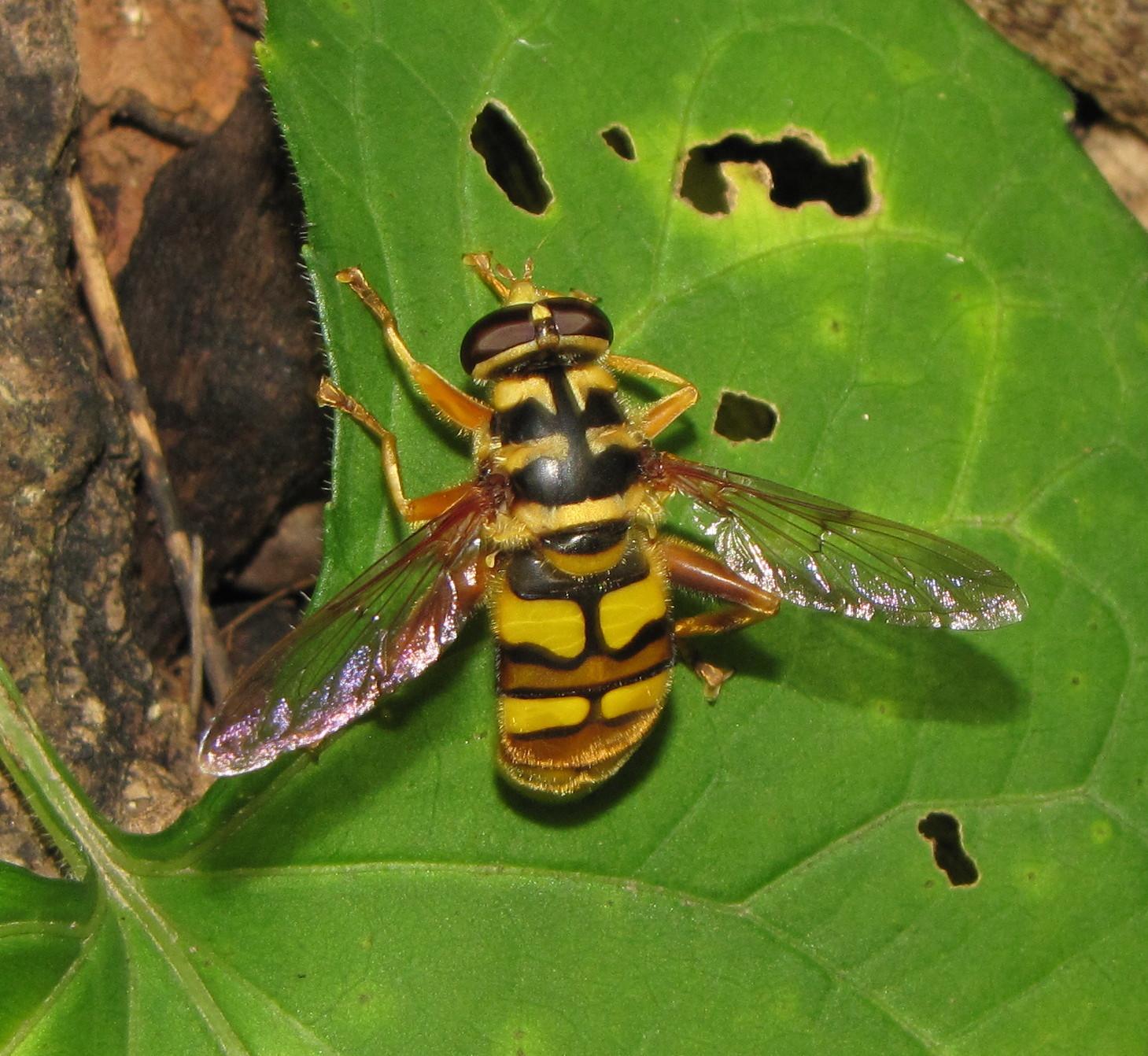 """Bug Eric: The """"News Bee"""""""