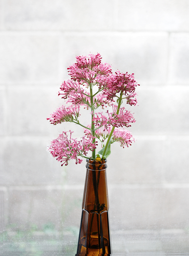 pink buddleja in used brown beer bottle