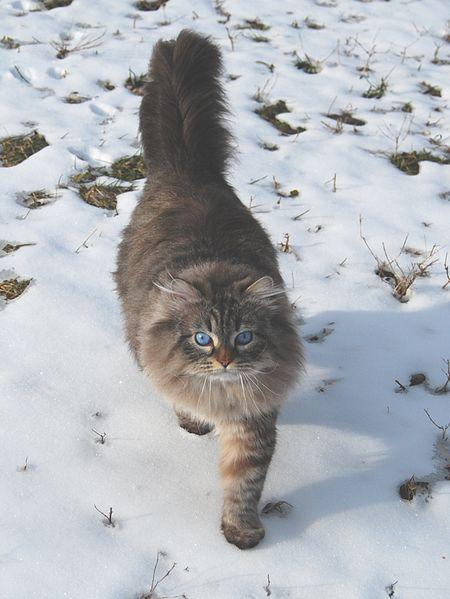 German Male Cat Names