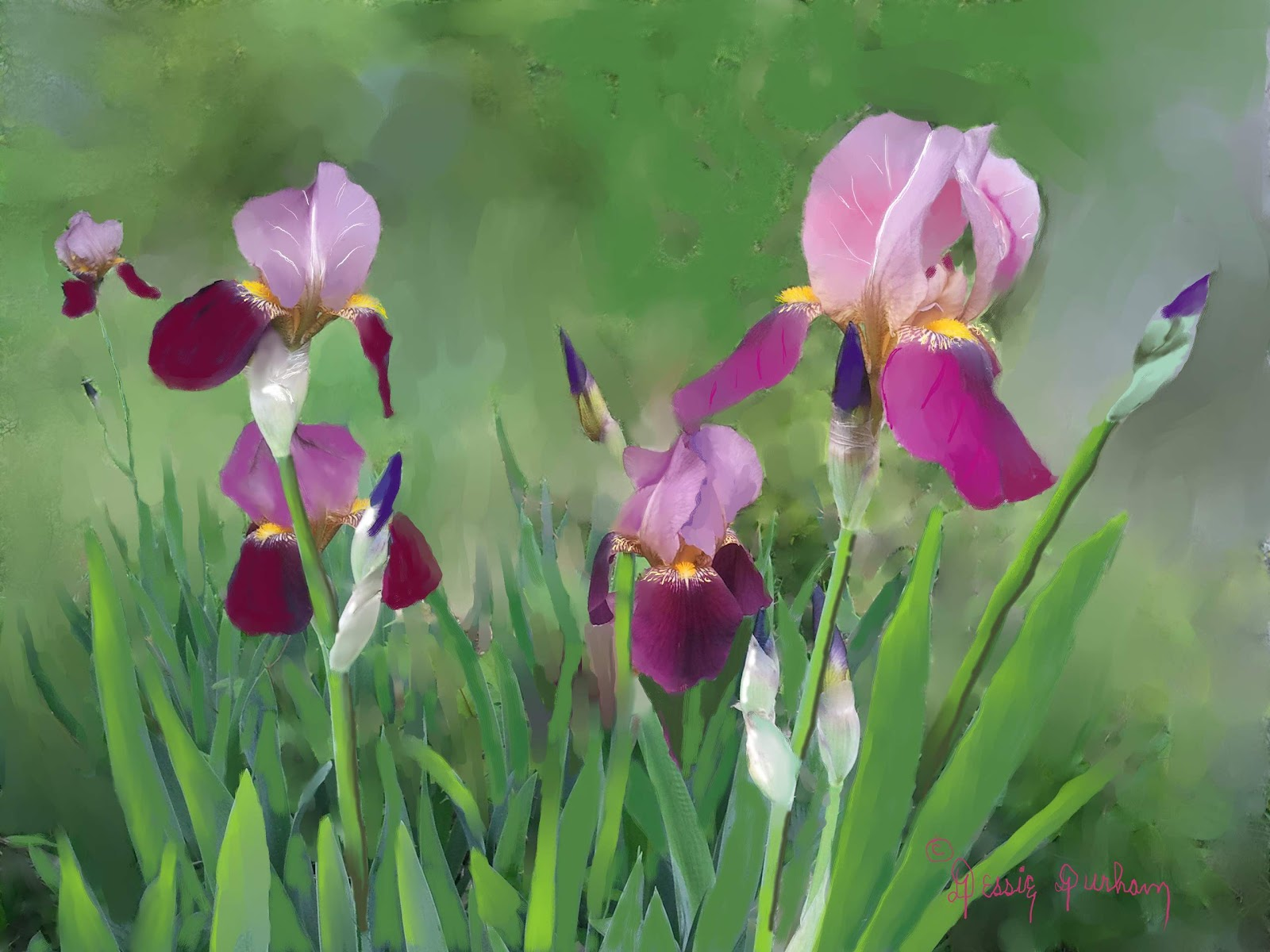 Dessie h durham oil and still life art purple iris flowers these purple irises grew in our yard last spring so a painting of these irises graces my living room walls i have never been able to wear purple but i izmirmasajfo