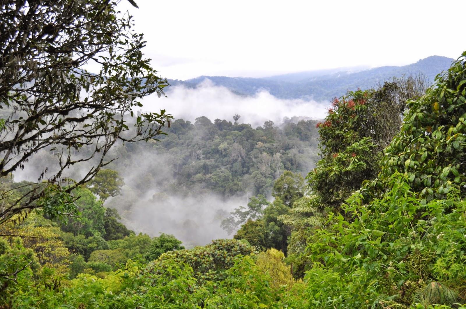 Deštný prales v národním parku Kerinci Seblat