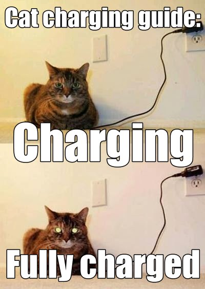 CatCharging+(1) sonographers blog beat back pain with ultrasound?