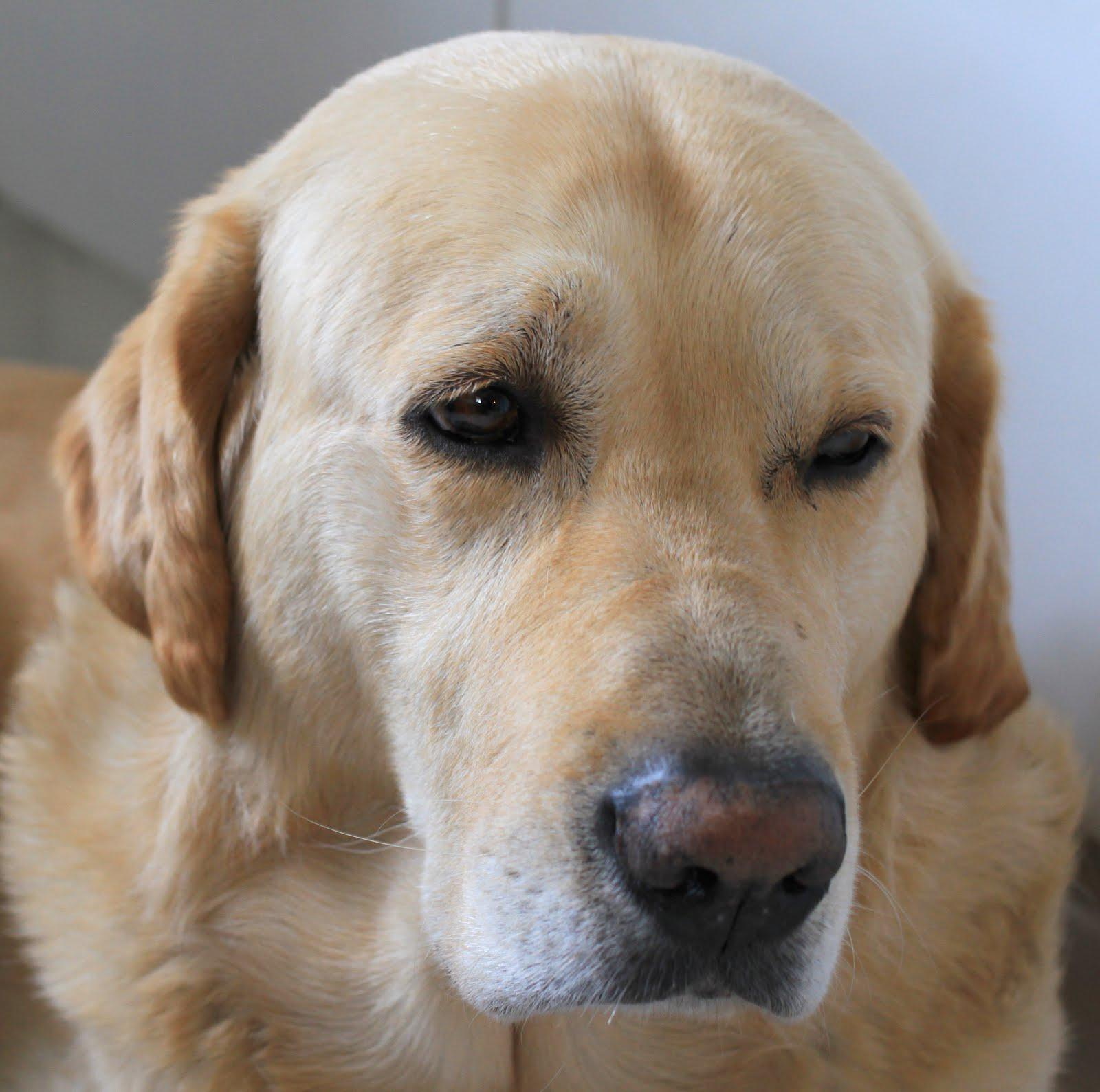 Vår fina hund Lukas