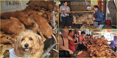 Rayakan Musim Panas, Ratusan Anjing Disantap Ramai-Ramai