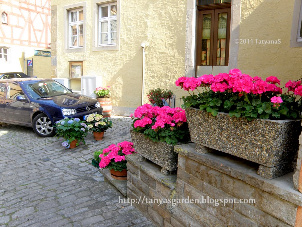 German Window Boxes in Pots in Window Boxes