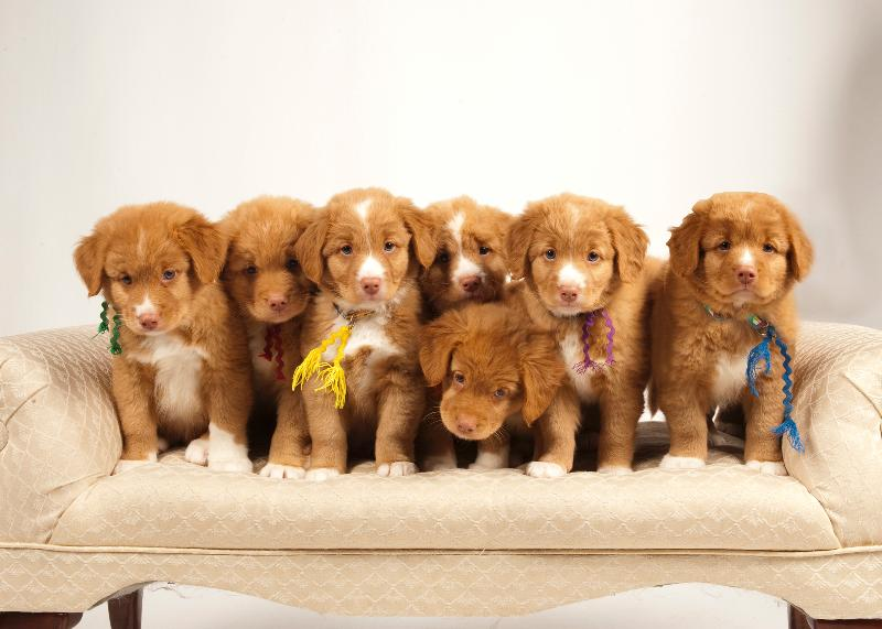 Bishop Ranch Veterinary Center The Four Ws Of Puppy Weaning By