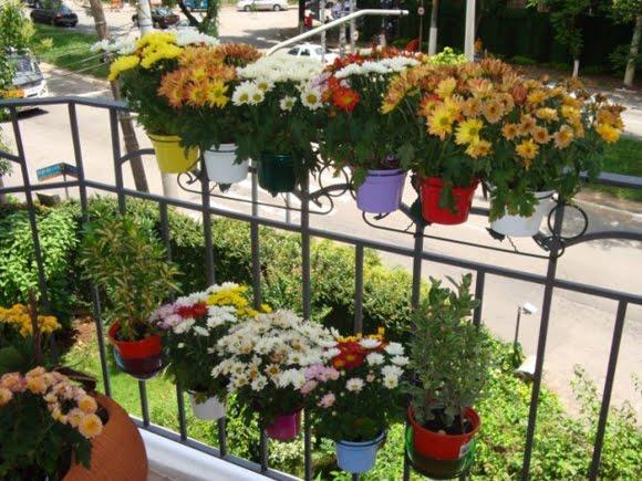 plantas jardim externo:Fogão Rosa: A beleza de um jardim de parede!