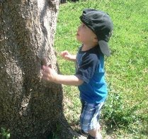 Treeesss