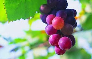 Ekstrak Kulit Anggur Sebagai Obat Anti Diabetes