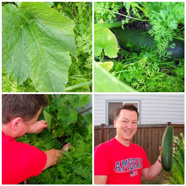 Clever crafty cookin 39 mama growing zucchini in small spaces - Growing in small spaces image ...