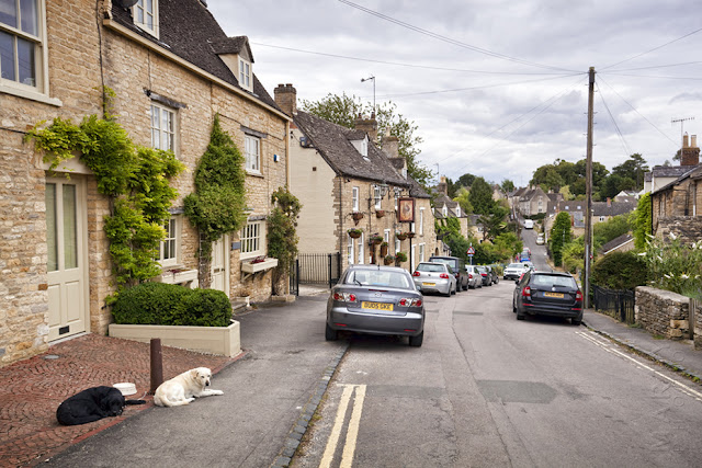 Two laxy dogs on Sheep Street in the Cotswold town of Charlbury by Martyn Ferry Photography