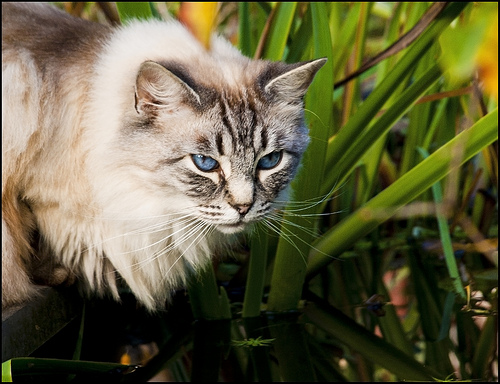 Cat on the prowl.