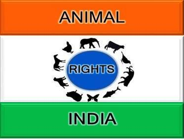 animal rights india Help animals india is a usa non-profit 501(c)(3) charity dedicated to supporting efficient and effective animal protection organizations in india.
