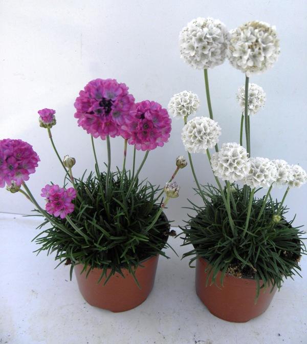 pflanzen und mehr plantas y mas plants and more pflanzen ihre ansprueche und verwendung 2. Black Bedroom Furniture Sets. Home Design Ideas