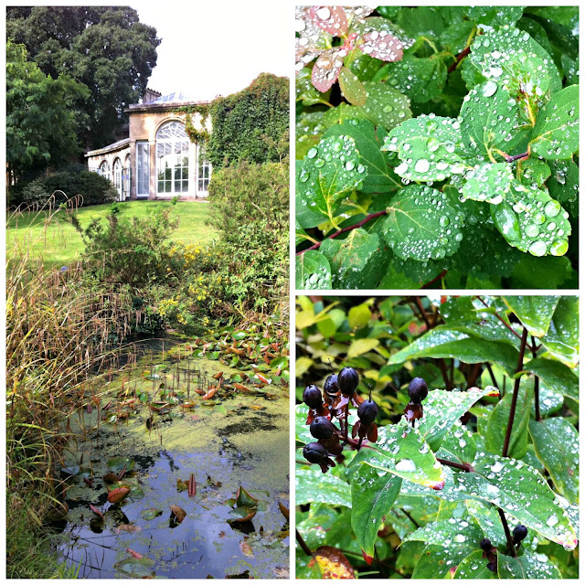Water drops sparkling on leaves and a view of the pond
