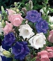 Jardin et Fleures