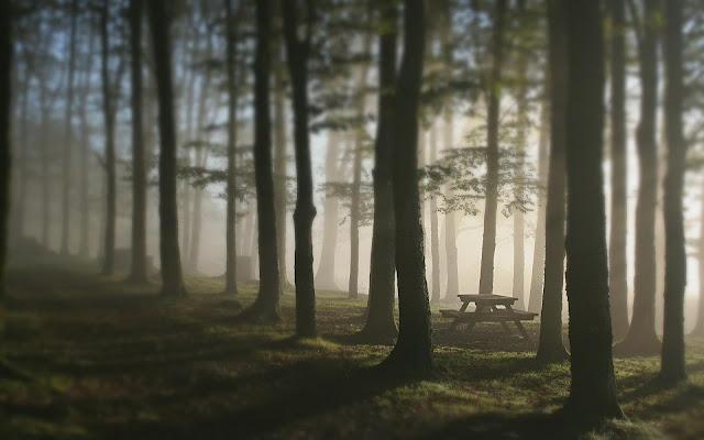 HD Foggy Forest in Sunlight
