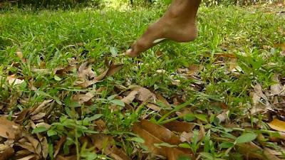 ecologia, naturaleza, salud y naturaleza