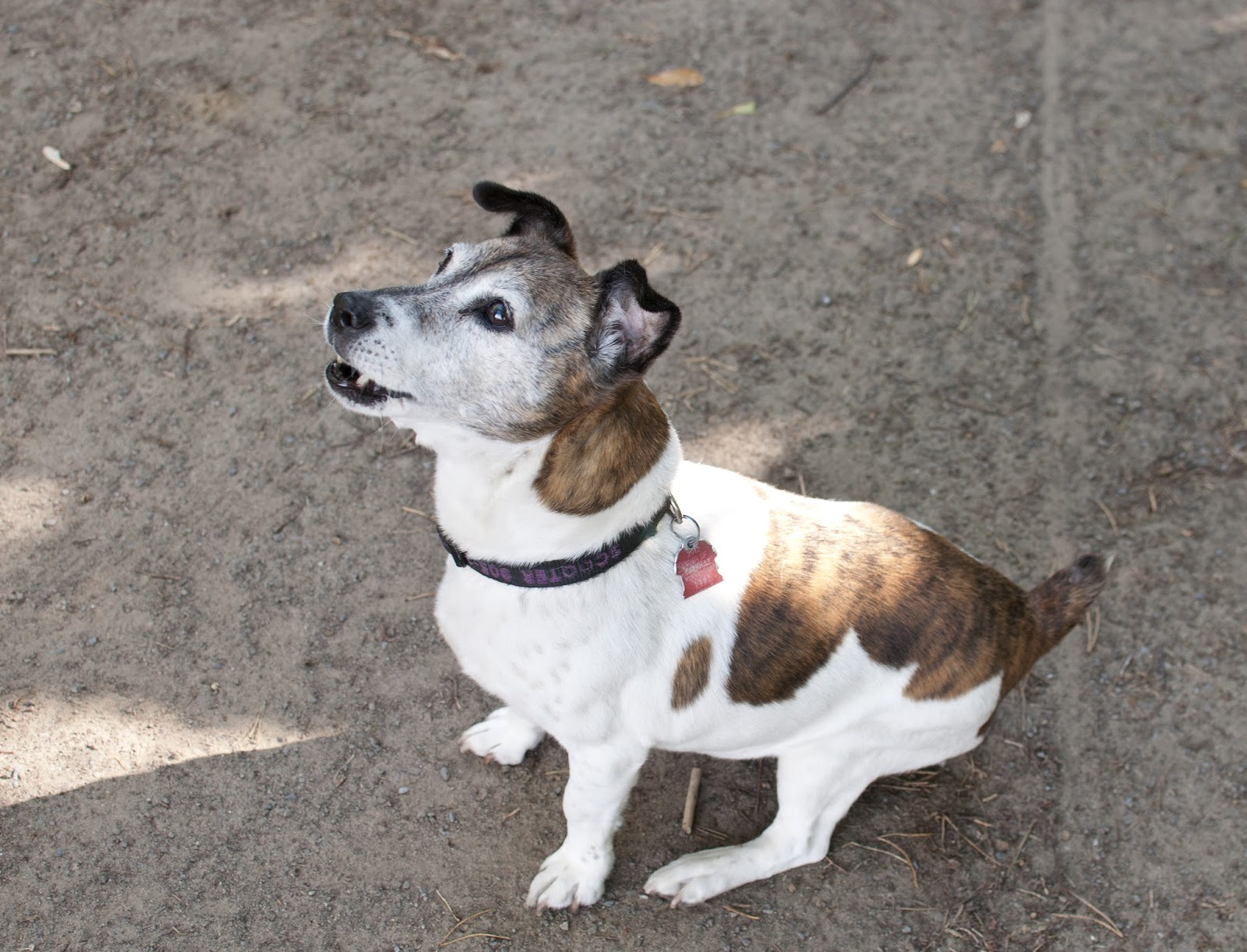 Image Result For Pat Dog Training