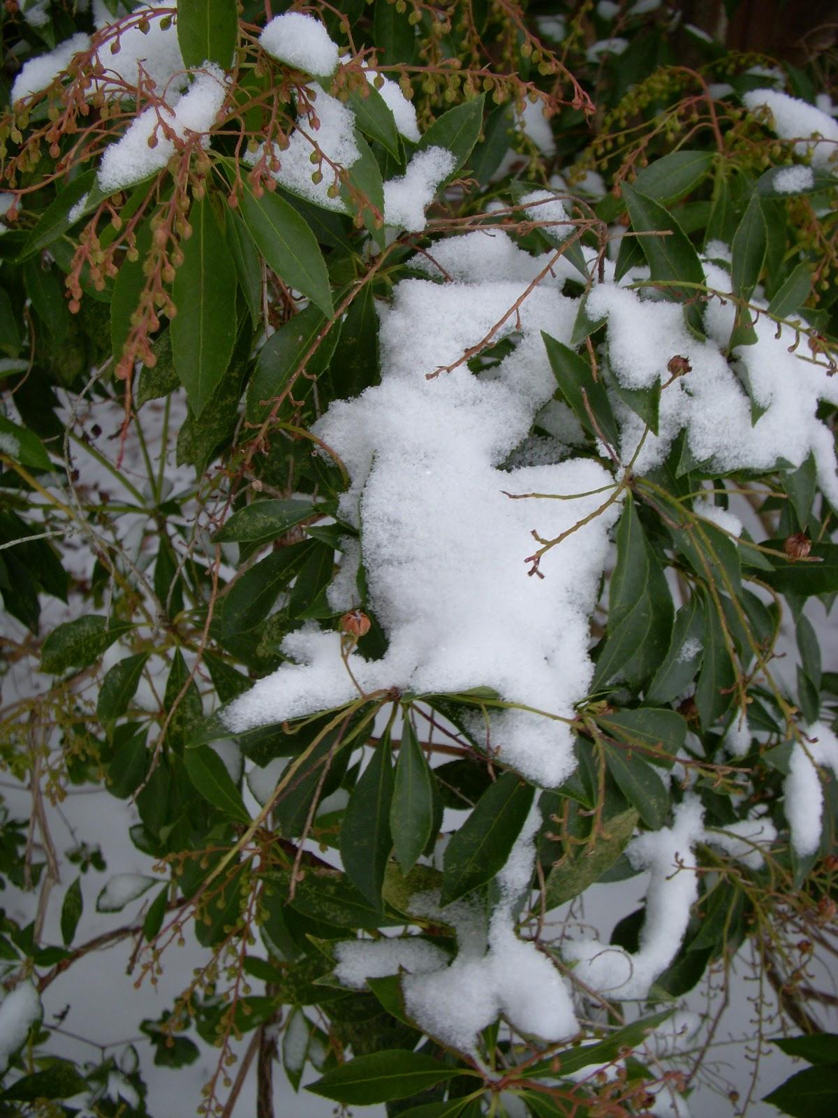 light flurries snow machine white