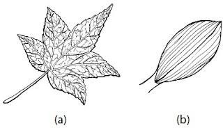 Bentuk dan susunan tulang daun dikotil monokotil