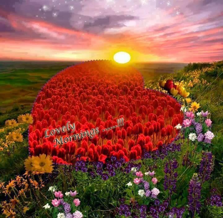 good morning my loveliest friends