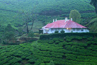 Munnar Honeymoon, Honeymoon Destinations Munnar, Munnar Honeymoon Packages, Honeymoon Resorts Munnar, Honeymoon Places in Munnar, Honeymoon Holidays in Munnar, Munnar Hillstation Honeymoon