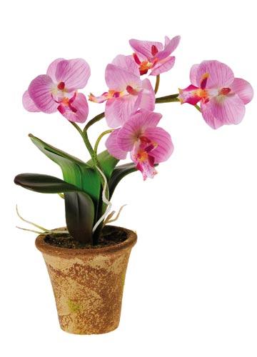 Arte y jardiner a el cuidado de las orqu deas - Como cuidar orquideas en maceta ...