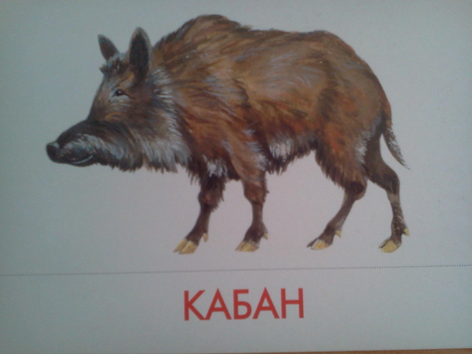 Иллюстрации с изображением животных