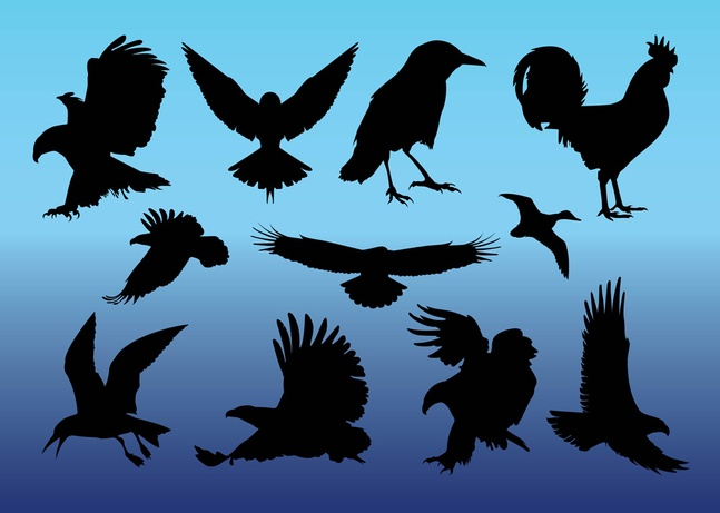 Free Birds Vectors Graphics Download