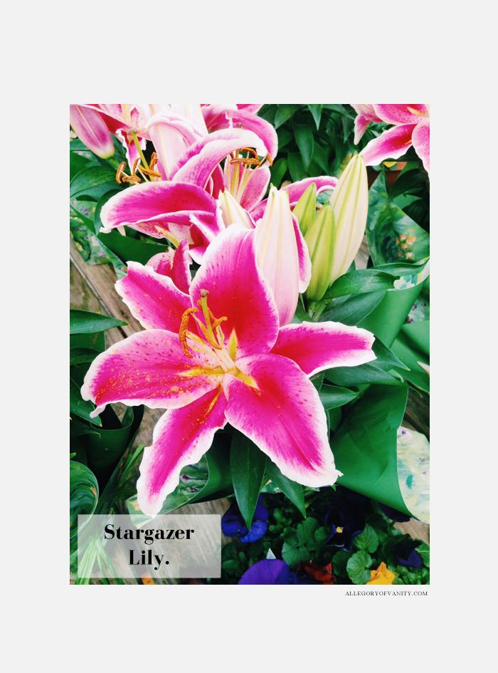 Spring Flower Show | Stargazer Lily | Allegory of Vanity