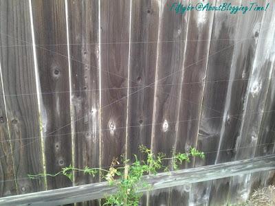 fl+yard+vine.jpg