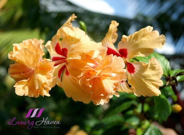 gardens by the bay singapore hibiscus review