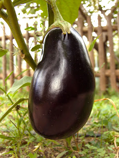 gluten-free eggplant