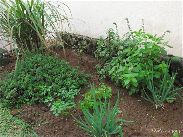 horta jardim e pomar:manjerona manjericão roxo e italiano e sálvia ao fundo